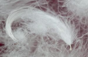 пух и перо для пуховиков