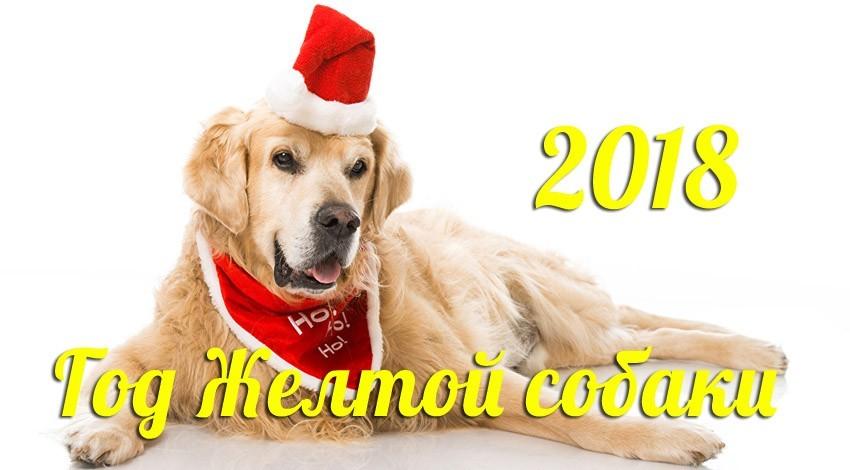 собака 2018, желтая земляная по китайскому гороскопу